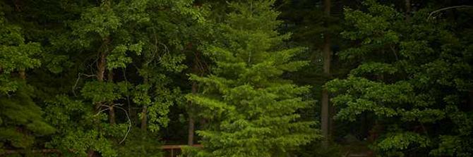NorthwoodsTrees